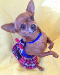 Scottish Chi